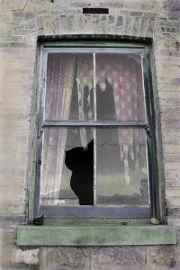Broken Window with Tattered Curtains by Nora Hernandez