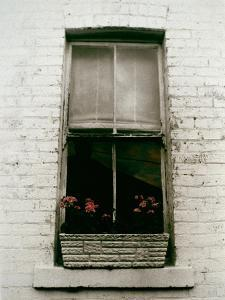 Window with Flower Box in Front of It by Nora Hernandez