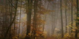 My November by Norbert Maier