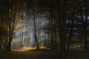 November Morning by Norbert Maier