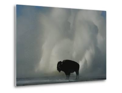 American Bison Silhouetted against Geyser Steam