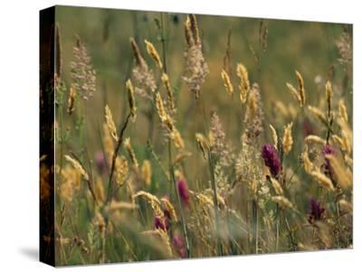 Colorful Seed Heads on Swaying Grasses