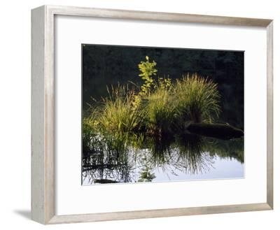Grasses and their Reflections in Calm Water