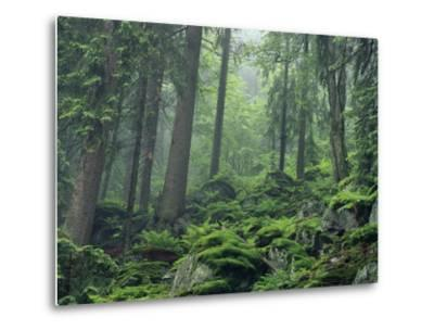 Moss-Covered Rocks Fill a Misty Wooded Hillside