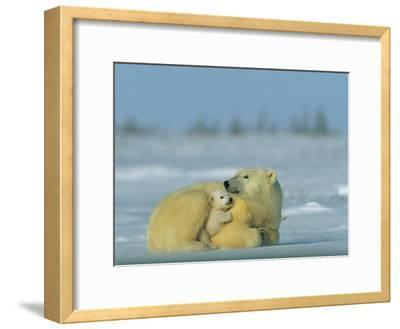 Mother and Cub Polar Bear Nestle Together for Warmth in the Arctic Landscape