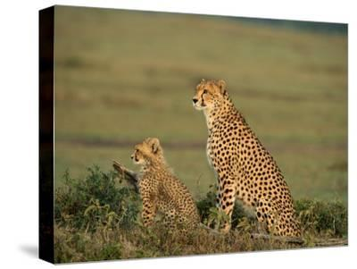 Mother Cheetah and Her Young Look Out onto the Landscape