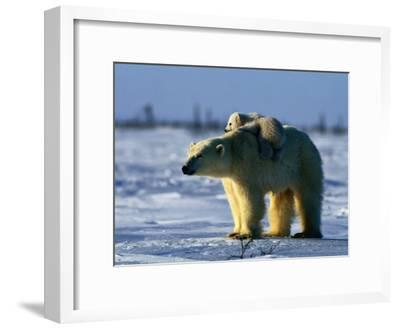 Polar Bear with Her Young