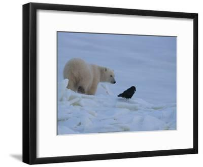 Portrait of a Polar Bear and a Raven