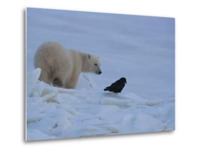 Portrait of a Polar Bear and a Raven