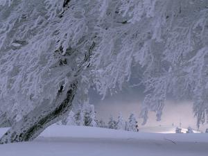 Snow-Blanketed Trees in a Fairy Tale Winter Landscape by Norbert Rosing
