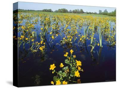 Spring Flood Plains with Wildflowers