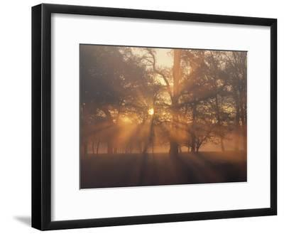 Sunlight Filters Through Trees and Fog at Sunrise