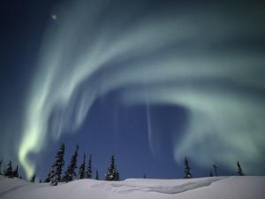 The Aurora Borealis over a Snowy Landscape with Evergreen Trees by Norbert Rosing