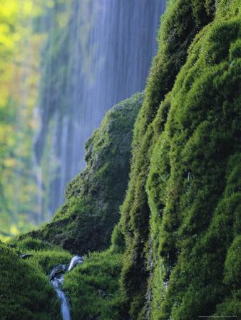 Water Trickles Down Moss-Covered Rocks as a Waterfall Cascades Behind