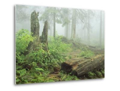 Woodland View in Fog with Ferns and Decaying Tree Trunk