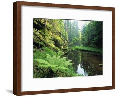 Woodland View with Ferns Along Stream