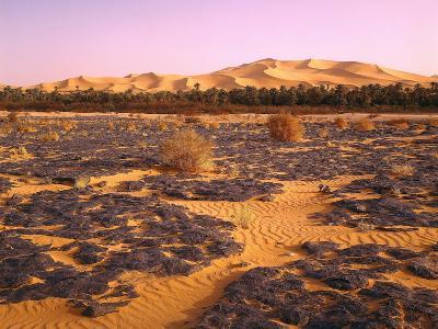 Nordafrika, Sahara, Saoura-Tal, Kalkstein, Vegetation, Sanddv¼nen, Wv¼ste-Thonig-Photographic Print