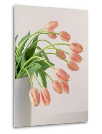 Pink Tulips, 1999
