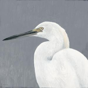 Seabird Thoughts 1 by Norman Wyatt Jr^