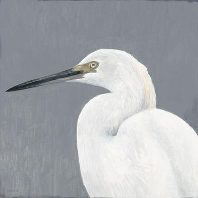 Seabird Thoughts 1