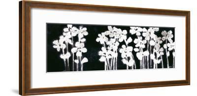 White Flowers on Black I