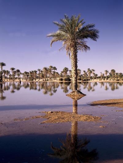 North Africa, Algeria, Sahara, Oasis, Date Palms-Thonig-Photographic Print