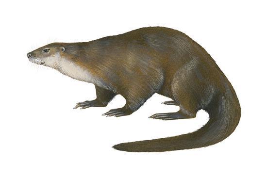 North American River Otter (Lutra Canadensis), Weasel, Mammals-Encyclopaedia Britannica-Art Print