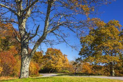 North Carolina, Blue Ridge Parkway, Green Knob Overlook Area-Jamie & Judy Wild-Photographic Print