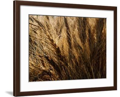 North China, Wheat Ears-Keren Su-Framed Photographic Print