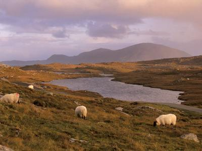 North Harris Hills Near Govig, Sheep and Lochan, North Harris, Outer Hebrides, Scotland-Patrick Dieudonne-Photographic Print