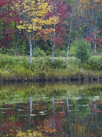 Northeast Creek Surrounded by Autumn Foliate, Desert Island, Maine-Tim Fitzharris-Photographic Print