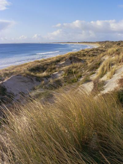 Northern Beach, Chatham Islands Islands-Julia Thorne-Photographic Print