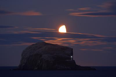 Northern Gannet (Morus Bassanus) Colony, Bass Rock with the Moon Rising, Firth of Forth, Scotland- Green-Photographic Print