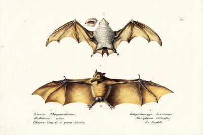 Northern Ghost Bat, 1824-Karl Joseph Brodtmann-Giclee Print