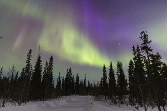 Northern Lights in Winter, Aurora Borealis, PyhŠ-Luosto National Park, Luosto, Lapland, Finland-P. Kaczynski-Photographic Print
