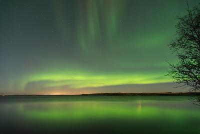 Northern Lights Reflecting in the Water with a Tree Silhouette-Brent Beach-Photographic Print