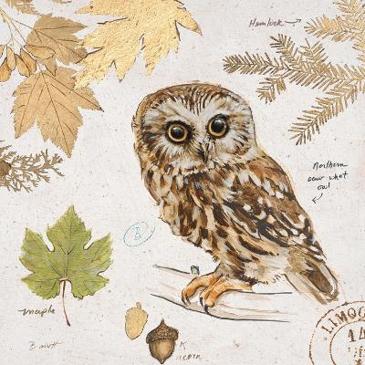 Northern Owl-Chad Barrett-Art Print