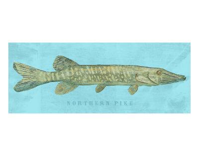 Northern Pike-John W^ Golden-Art Print
