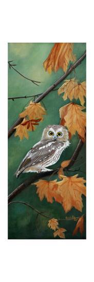 Northern Saw Whet-Julie Peterson-Art Print