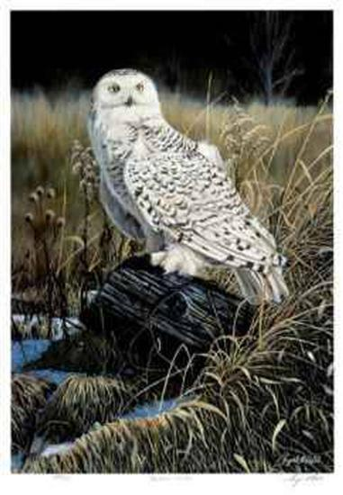 Northern Visitor-Cyril Cox-Collectable Print
