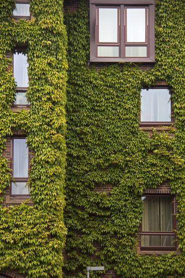 Norway, Bergen. Bryggen Building with Ivy-Kymri Wilt-Photographic Print