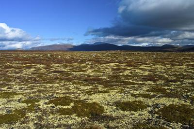 https://imgc.artprintimages.com/img/print/norway-dovrefjell-sunndalsfjella-national-park-autumn-in-dovrefjell-plateau-with-cup-lichens_u-l-q1bzayp0.jpg?p=0