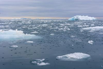 Norway. Nordaustlandet Island. Brasvelbreen. Brash Ice in the Water-Inger Hogstrom-Photographic Print