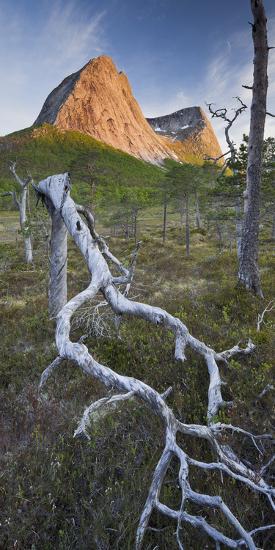 Norway, Nordland, Lofoten, Ballangen, Saetran, Efjorden, Stortindan, Dead Tree-Rainer Mirau-Photographic Print