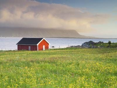 Norway, Northern Country, Lofoten, Gimsoya, Meadow, Hut-Rainer Mirau-Photographic Print