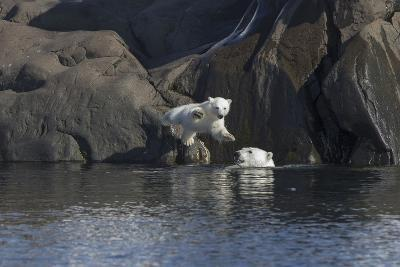 Norway, Svalbard, Polar Bear and Cub Coming Off Rocks to the Ocean-Ellen Goff-Photographic Print