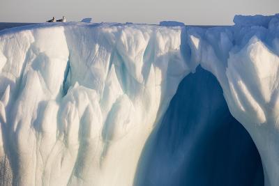 Norway, Svalbard, Spitsbergen. Northern Fulmars Rest Atop Glacier-Jaynes Gallery-Photographic Print