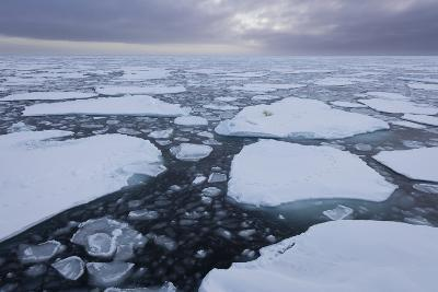 Norway, Svalbard, Spitsbergen. Polar Bear on Sea Ice at Sunset-Jaynes Gallery-Photographic Print