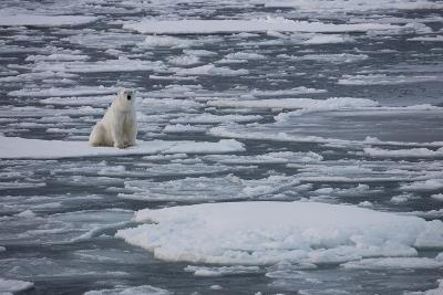Norway, Svalbard, Spitsbergen. Polar Bear Rests on Sea Ice-Jaynes Gallery-Photographic Print