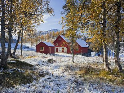 Norway, Valldalen, Farm, Birches, Late Autumn-Rainer Mirau-Photographic Print